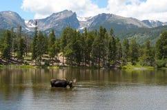 Cremalheira agradável no lago bear Foto de Stock