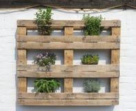 Cremalheira de madeira com ervas frescas em uma parede branca Imagem de Stock Royalty Free