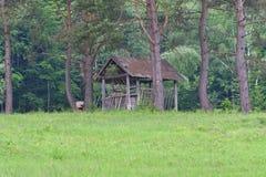Cremalheira de madeira da forragem para cervos na floresta fotografia de stock royalty free