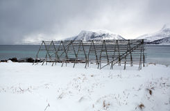Cremalheira de secagem ártica dos peixes de bacalhau Foto de Stock