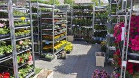 Cremalheiras com flores em um mercado da semana Fotografia de Stock Royalty Free