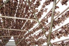 Cremalheiras de madeira no foreshore para secar peixes de bacalhau no inverno Aldeia piscat?ria de Reine, ilhas de Lofoten imagens de stock