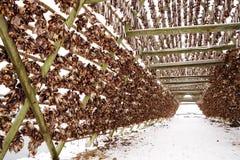Cremalheiras de madeira no foreshore para secar peixes de bacalhau no inverno Aldeia piscat?ria de Reine, ilhas de Lofoten imagem de stock
