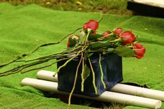 Cremation urn for burial with red roses. Small oblong marble cremation urn set atop of a hole ready to be buried in the ground. Decorated with red long stem royalty free stock photography