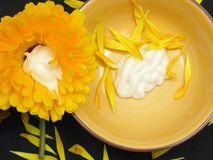 Creme of marigold with petals and flower Royalty Free Stock Photography