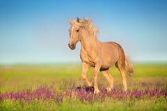 Cremello koń w kwiatach zdjęcie stock