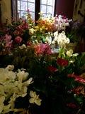 Cremona Italien blomsterhandel Royaltyfri Fotografi