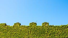 Crenellatedmuur met schoorsteen en klimop Stock Afbeeldingen