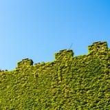 Crenellatedmuur met schoorsteen en klimop Stock Foto