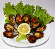 Fried mussels Royalty Free Stock Photos