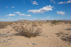 Creosote in Mojave Desert Royalty Free Stock Photos