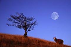 Crepúsculo Fotos de Stock
