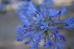 Crepúsculo azul Fotografia de Stock Royalty Free