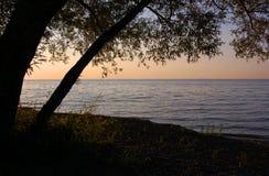 Crepúsculo bajo árbol Fotos de archivo libres de regalías