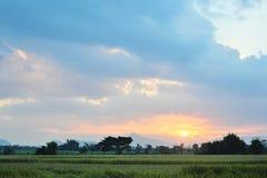 Crepúsculo del campo del arroz del paisaje Imágenes de archivo libres de regalías