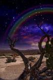 Crepúsculo del desierto Imágenes de archivo libres de regalías