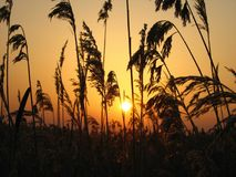 Crepúsculo dourado Foto de Stock