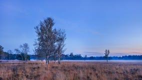 Crepúsculo en la tierra tranquila del brezo, los Países Bajos Imagenes de archivo
