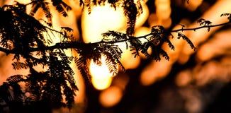 Crepúsculo - lago de BTM imagens de stock royalty free