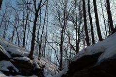 Crepúsculo nas madeiras Imagens de Stock