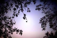 Crepúsculo no inverno Fotografia de Stock