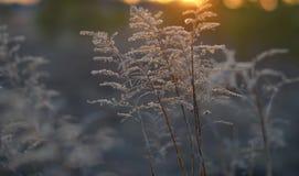 Crepúsculo, puesta del sol Plantas del campo Imagenes de archivo