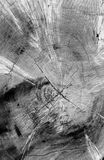 Crepa in albero Fotografie Stock