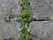 Crepa del marciapiede Fotografie Stock Libere da Diritti