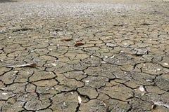 Crepe del fango Immagini Stock Libere da Diritti