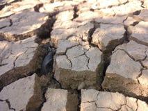 Crepe della terra Immagini Stock