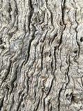 Crepe e scanalature della corteccia di albero Fotografia Stock Libera da Diritti