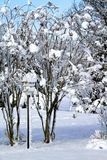 Birdhouse by Crepe Myrtles covered in snow Royalty Free Stock Photography