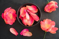 Crepe paper peony flowers Stock Photography