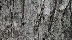 Crepe sulla corteccia di albero stock footage