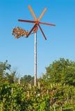 Crepitio del vento in vigna, Slovenia Fotografia Stock