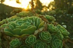 Crepuscolo e cactus immagine stock libera da diritti