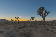 Crepuscolo in Joshua Tree National Park Fotografie Stock Libere da Diritti