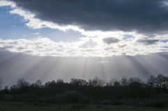 Crepuscular rays and treetops Stock Photos