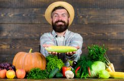 Cresça colheitas orgânicas Chapéu de palha do fazendeiro que apresenta legumes frescos Espiga de milho ou milho farpado alegre da fotografia de stock royalty free