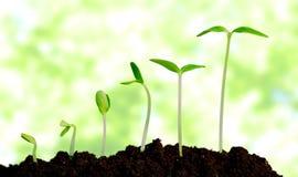 Cresça, crescendo, planta Fotos de Stock