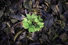 Cresça esperançosamente Foto de Stock