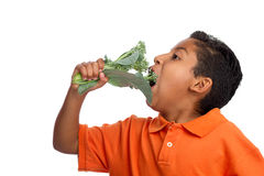 Cresça Healty que come seus verdes Imagens de Stock