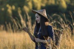 Cresça o arroz Fotos de Stock