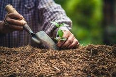 Cresça o fruto de paixão, plante uma árvore na natureza foto de stock royalty free