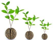 Cresça a semente Fotografia de Stock Royalty Free