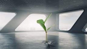 Cresça sua renda 3d rendem Fotografia de Stock Royalty Free