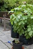 Cresça suas próprias batatas Fotografia de Stock Royalty Free