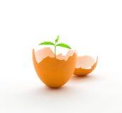 Cresça uma árvore na casca de ovo, conceito do crescimento imagens de stock royalty free