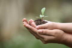 Cresça plantas Imagens de Stock Royalty Free