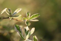 Cresca il giovane albero delle foglie sul fondo della sfuocatura immagini stock libere da diritti